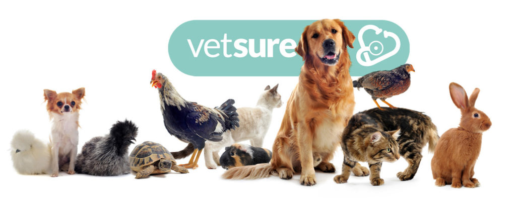 Vetsure Insurance, Times Finalists for the 2nd Year in a Row!